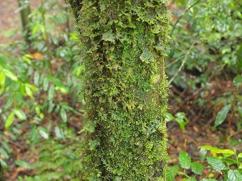 森林中霧氣沾濕的苔蘚