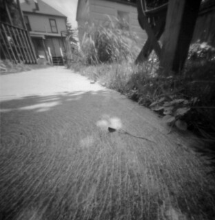 softwood medium format pinhole test shot_1