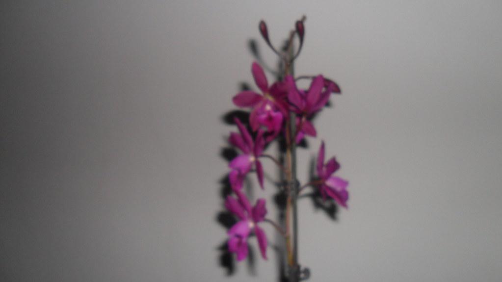 Orhideele lui Victor - Pagina 6 7344394334_95fe21ede6_b