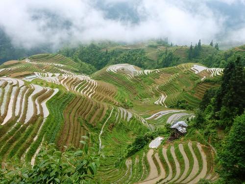 C-Guangxi-Pingan-Terrasse des 7 etoiles (57)