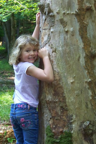 Q6 climbing striped tree