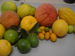 plant(0.0), clementine(1.0), citrus(1.0), orange(1.0), lemon(1.0), key lime(1.0), meyer lemon(1.0), kumquat(1.0), yuzu(1.0), produce(1.0), fruit(1.0), food(1.0), tangelo(1.0), sweet lemon(1.0), bitter orange(1.0), citron(1.0), lime(1.0), tangerine(1.0), mandarin orange(1.0),