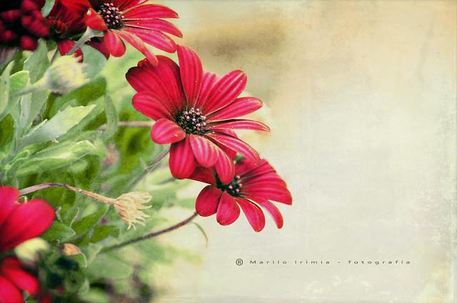 Jueves florido ...