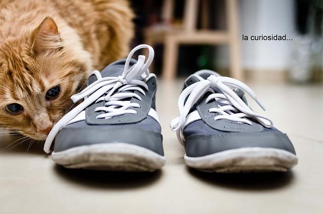 249/366: la curiosidad...
