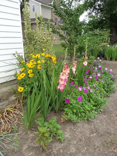 Mom's Yard June 2012 (12)