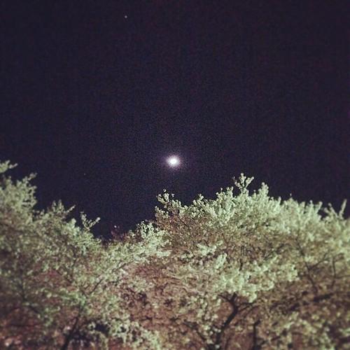 お月様と桜