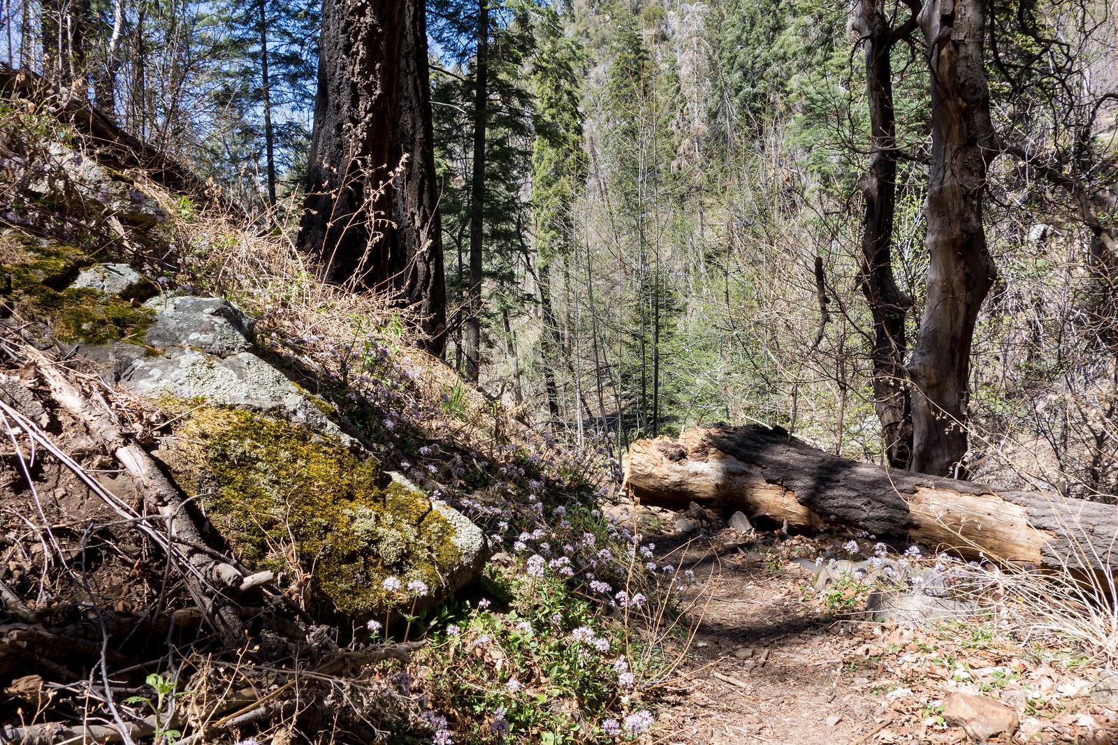 1404 Butterfly Trail