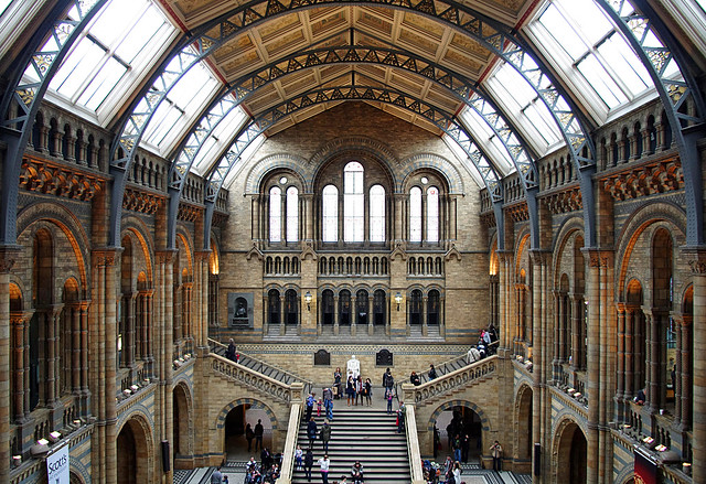 National History Museum London 046