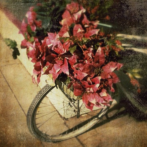 Flowers On Bike by Suzette ~ desertskyblue ~ Offline