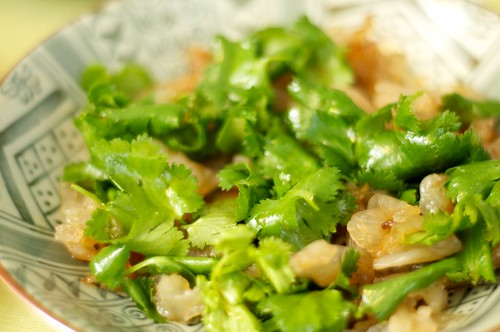 jellyfish and coriander