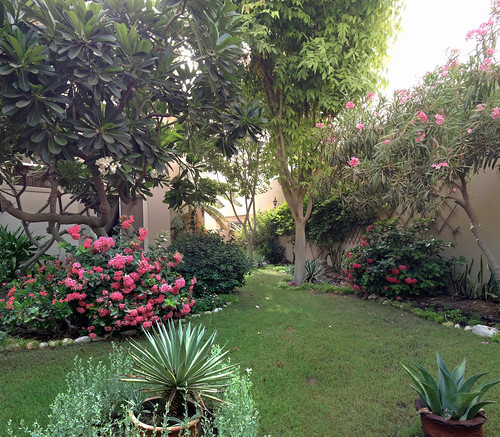 Our garden, viewed from the garage