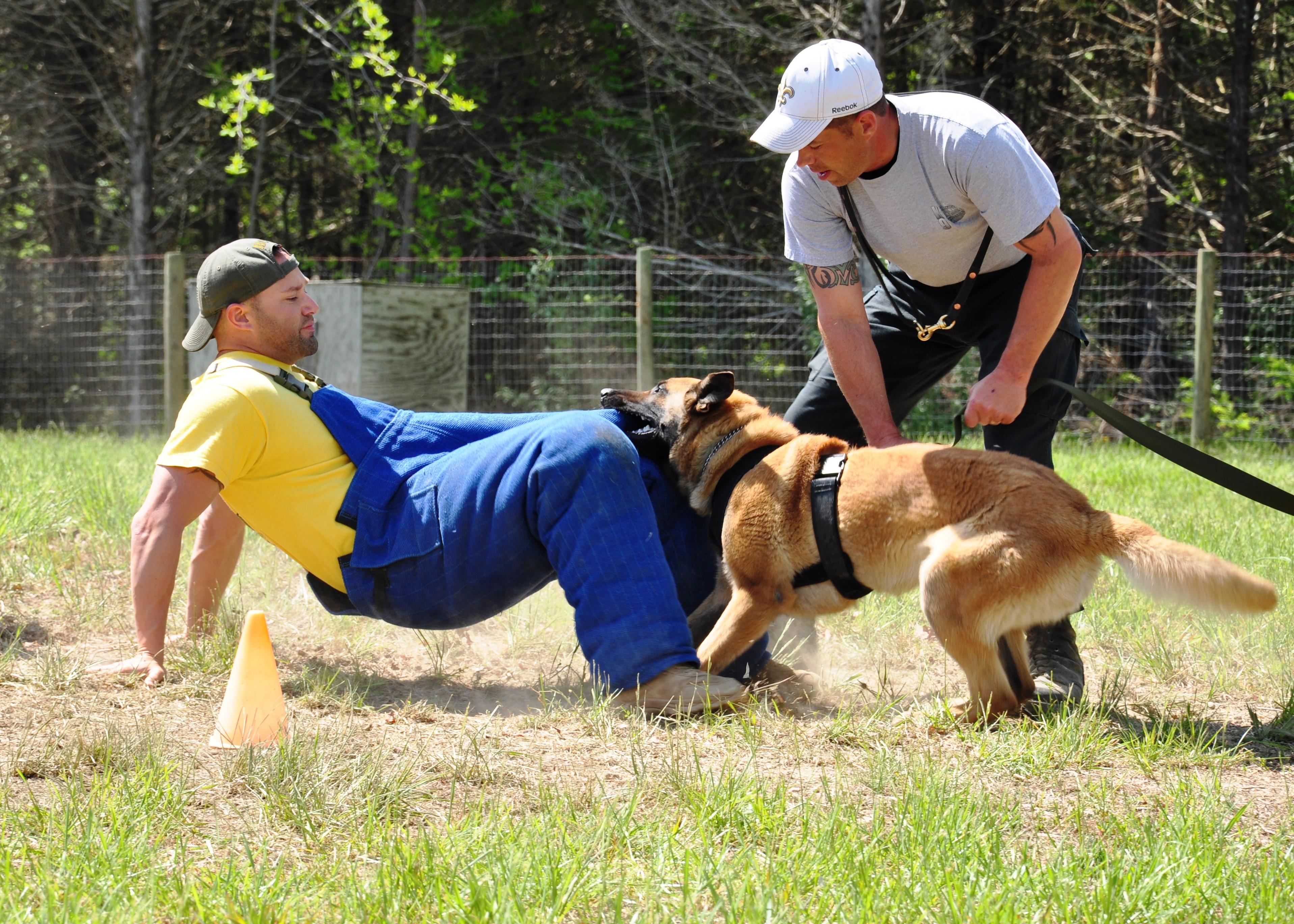 Intensive Dog Training Durham Region