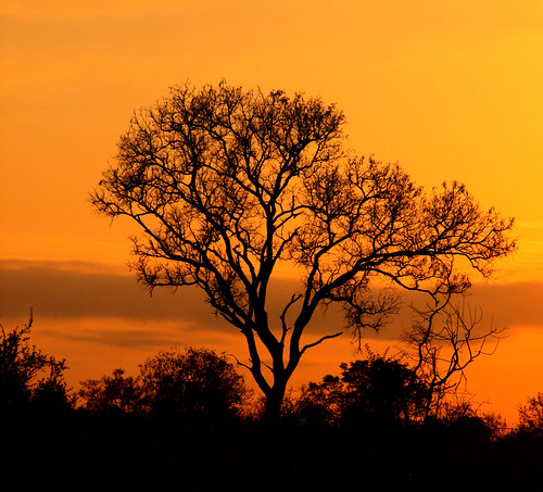 (Meilleur) Sunrise in Kruger Park