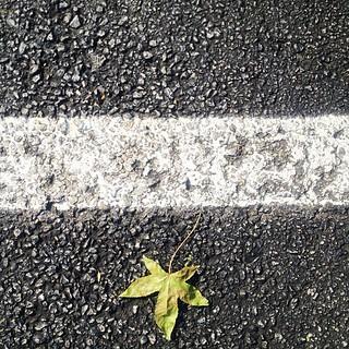 iphone - lone leaf