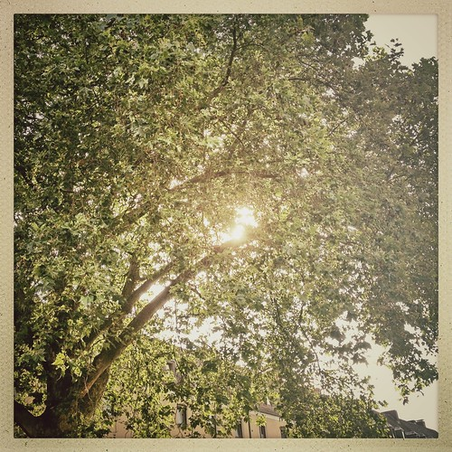 #tree #green #summer #sunset #evening #eavig #igers #iphone #igdaily #instagood #instamood #iphonesia #instadaily #iphoneonly