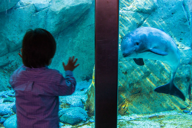 The Boy and the Porpoise
