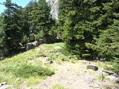 Trace Samulaghja-Quercitella : sur la crête après la descente du couloir herbeux, arrivée à la clairière)