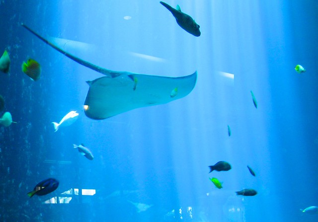 Fish in Hawaii Aquarium