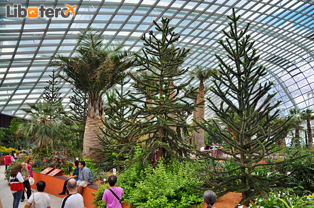 Gardens by the Bay Singapore Flower Dome