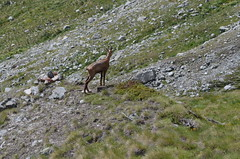 adventure(0.0), mountain(0.0), tundra(1.0), fauna(1.0), wilderness(1.0), chamois(1.0), wildlife(1.0),