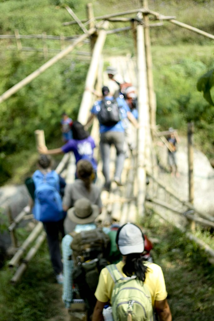 southeast asia rainforest bridge