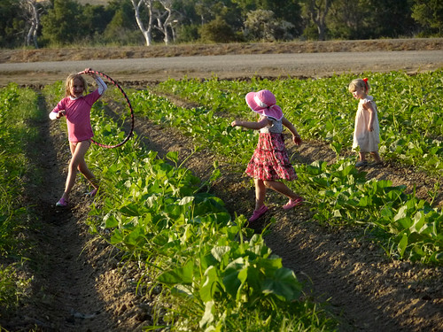 Capay Tomato Festival 2012
