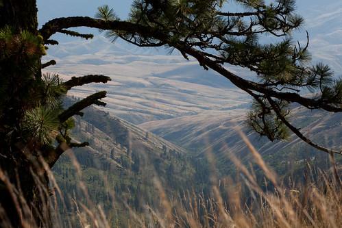 trees view unitedstates idaho rafting grangeville