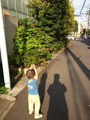 朝散歩 (2012/8/9)