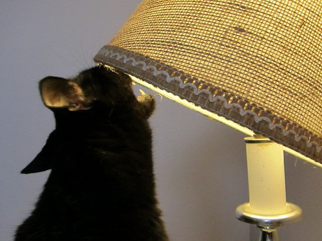 Henry & the lampshade