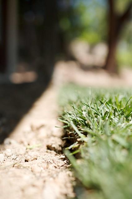 frontyard  012