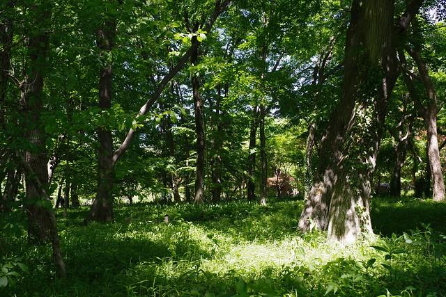2016/05/04_神代植物公園-0