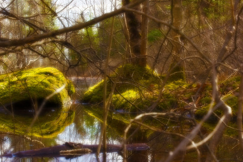 trees color tree wet water pool forest landscape landscapes spring pond woods pools wetlands vernal habitat ponds wetland