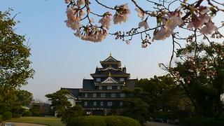 烏城(岡山城)の桜。 2012.4.5