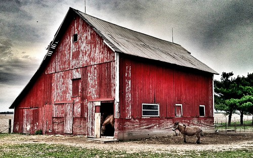 A horse, a mule and a red barn.