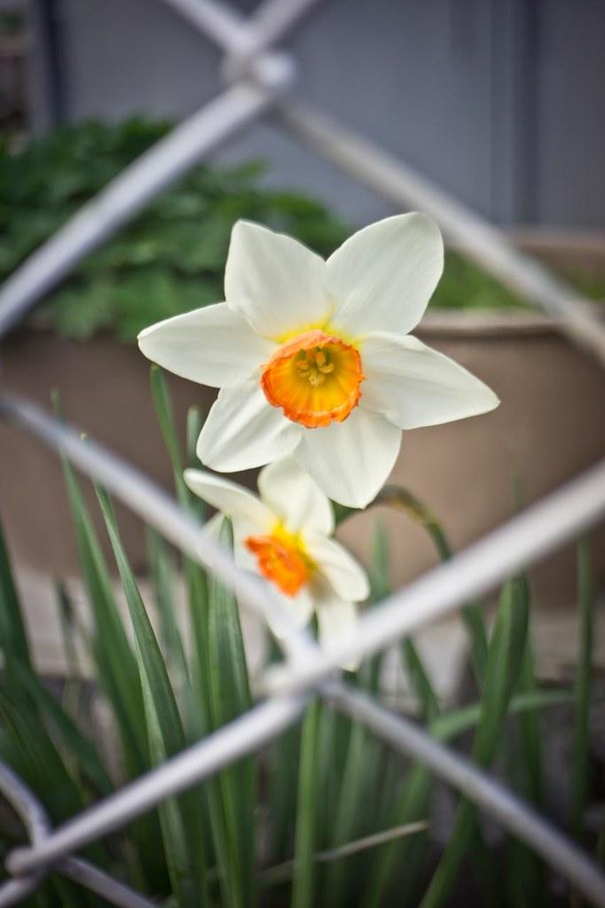 Flower 2012/03/30
