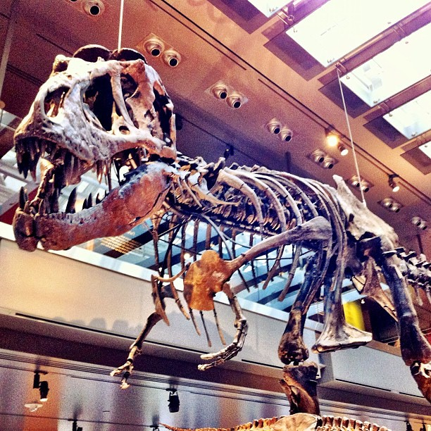 Hello Mr. T-Rex. We endured the rain for  fieldtrip.