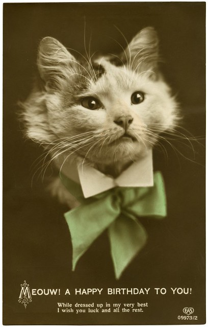 vintage birthday cats cat - photo #36