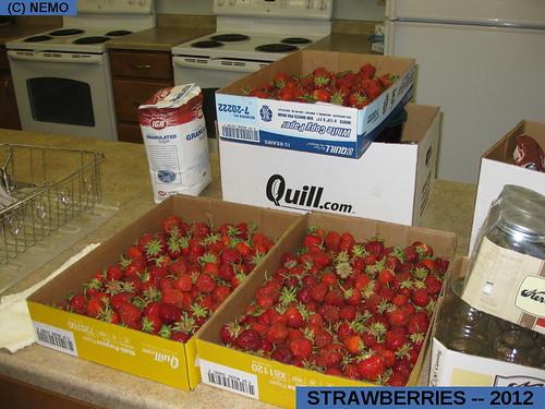 strawberries--2012