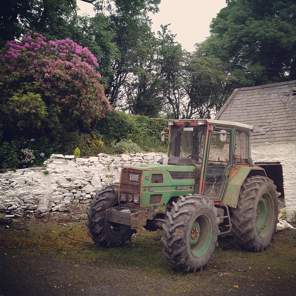 On the farm in Ireland.