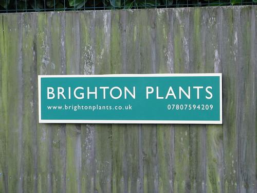 Brighton Plants