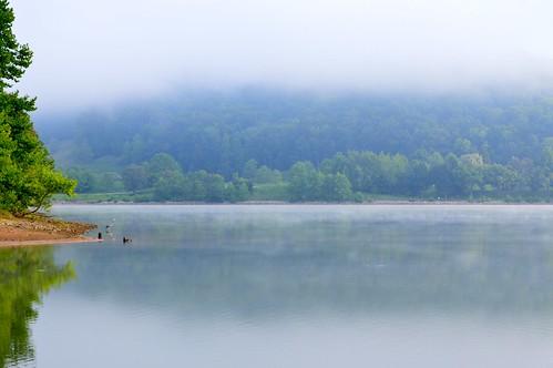 morning trees mist west bird heron water fog landscape dawn virginia pond wildlife great land scape