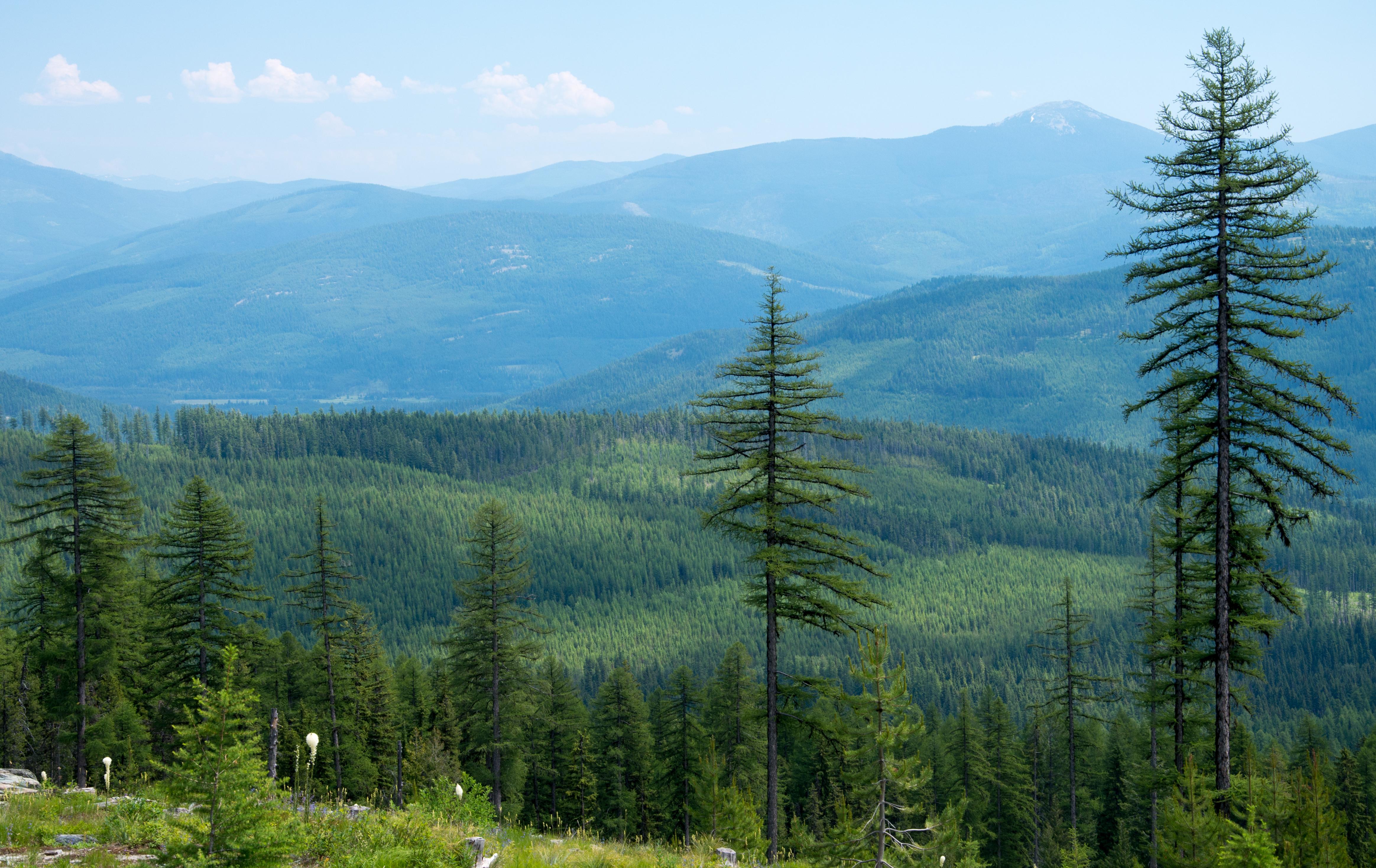 Elevation Of Northwest Peak Montana Usa Topographic Map