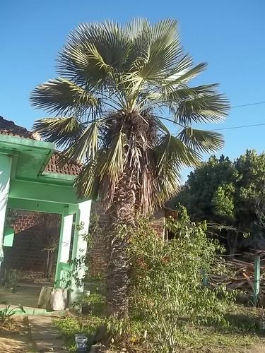 Palmeira dia 27 de julho 2012 003