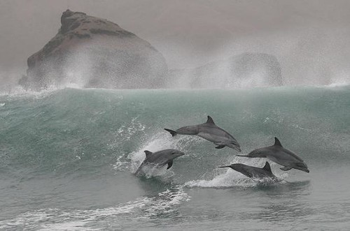 Dolphin watching in Peru with Nature Expeditions 01
