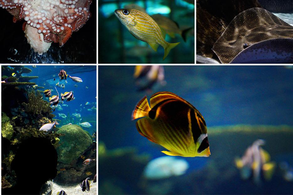 072612_10_aquarium03