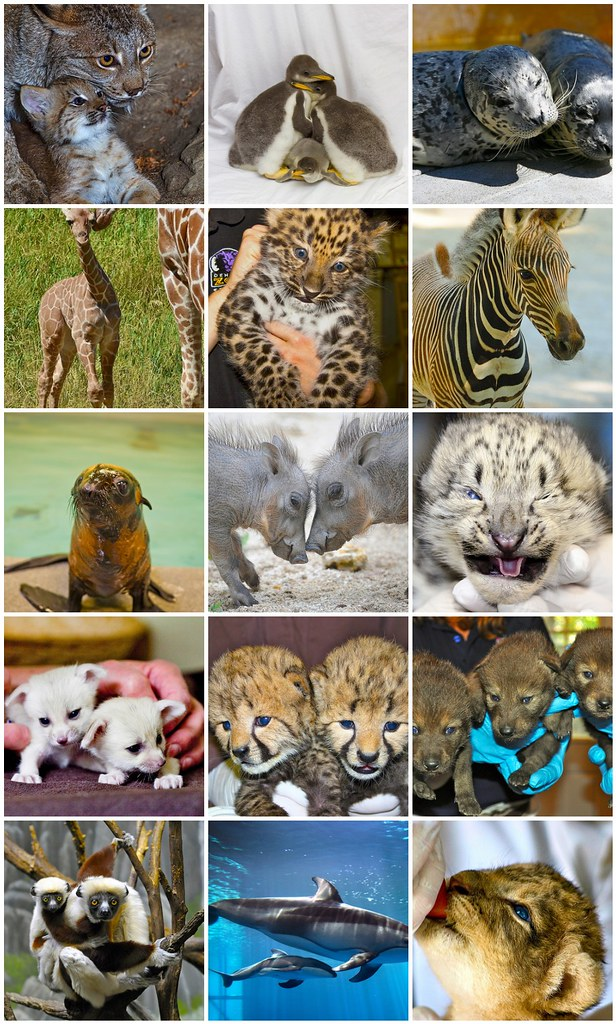 Travelocity & Zooborns: 15 Must-Visit Zoo Babies of 2012