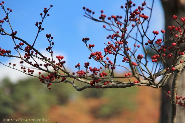 20111108_WuFamilyJapan_1428 f