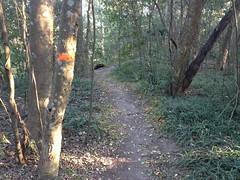 Flint River Trail