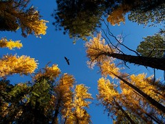 Fall Photo of the Day: Shevlin Park, Bend