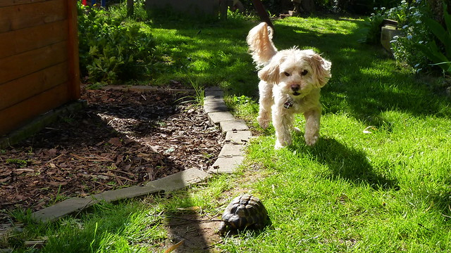 Dog vs. Turtle